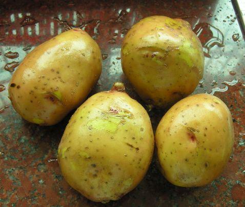 蒸土豆的做法大全
