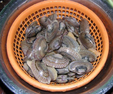 罗勒炒花蛤的做法大全