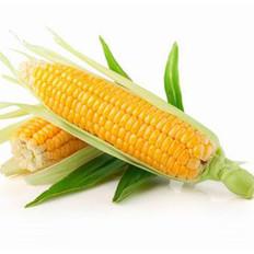 玉米有3大神奇治病功效