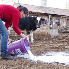 营养丰富的牛奶为何成批倒掉?