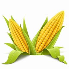 吃玉米的好处与健康吃法