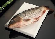 五大连池草鱼