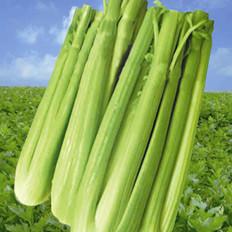 芹菜——清肠排毒