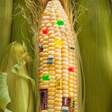 我国退运125万吨美转基因玉米