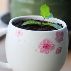 酸奶盆栽的做法