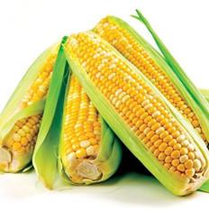 常吃玉米竟有这些好处