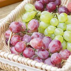 无籽葡萄与避孕药有关?
