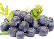 中国北极蓝莓